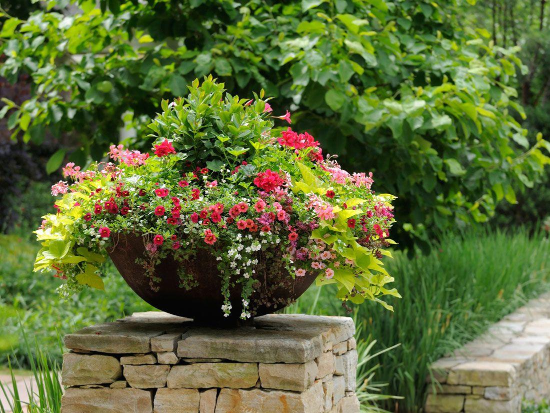 Фото цветы в вазонах